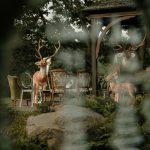 Kāzas mežā - sapnis